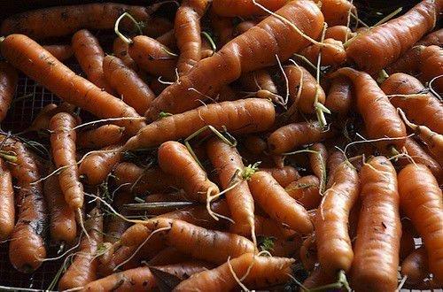 Зимняя морковь