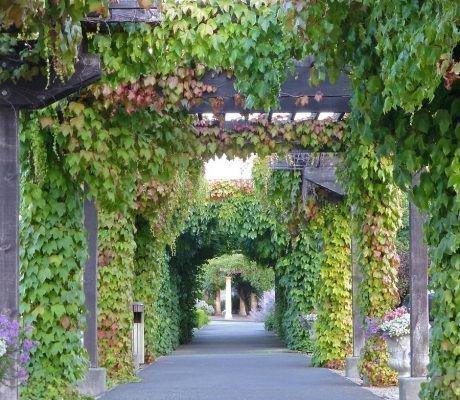 Арки для винограда