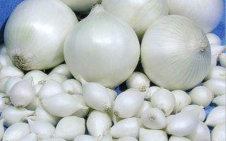 Выращивание белого лука из севка