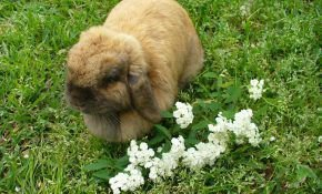 Сколько живет декоративный кролик