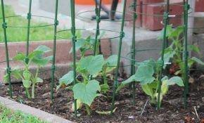 Как проводить формирование кустов огурцов в теплице?