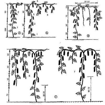 Инструкция прищипывания огурцов