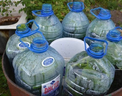 Выращивание огурцов в пятилитровых бутылках