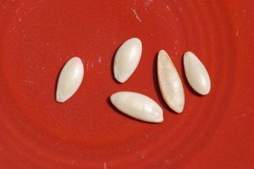 Огуречные семена