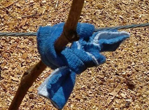 Подвязка виноградной лозы