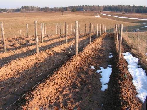 Полное укрытие винограда