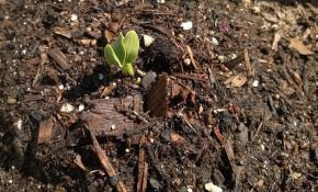 Высадка огурцов в открытый грунт семенами. Когда сажать огурцы