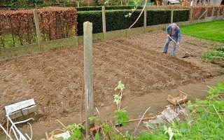 Особенности посадки и выбора сортов картофеля для Средней полосы