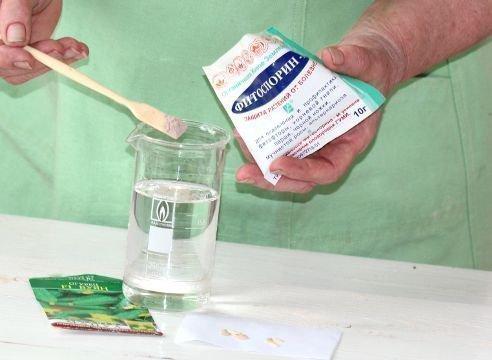 Проращивание семян огурца