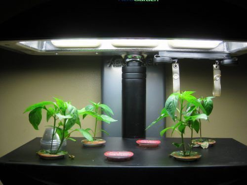 Выращивание перца чили подсвечивание
