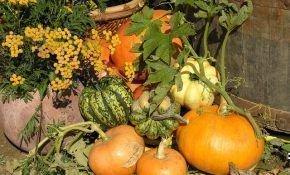 Как правильно можно посадить тыкву в открытый грунт