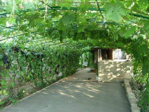 Арочный виноград
