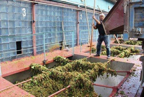 Дербентский завод виноградники