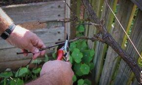 Способы формирования виноградного куста