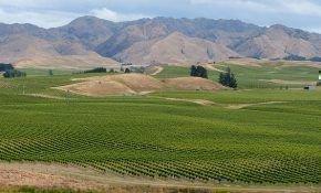 Самые крупные виноградники мира