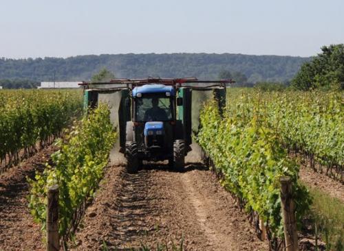Обработка кустов винограда