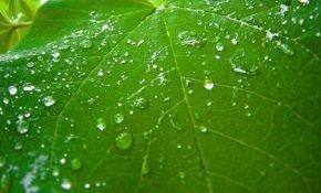 Виноград: как правильно провести обработку после дождя
