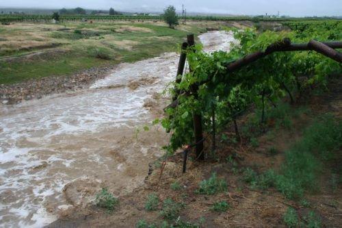 Опрыскивание винограда после дождя