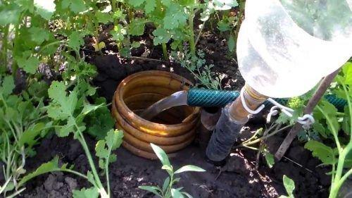 Подземный полив винограда