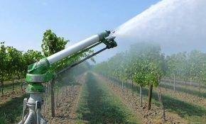 Как нужно поливать виноград? Способы полива