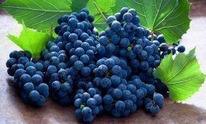Польза винограда: витамины в черном винограде