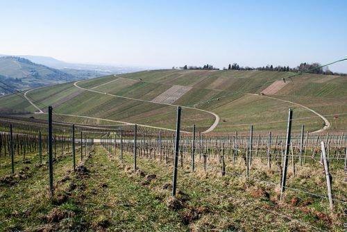 Расположение виноградника
