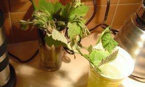 Виноград: особенности размножения летом