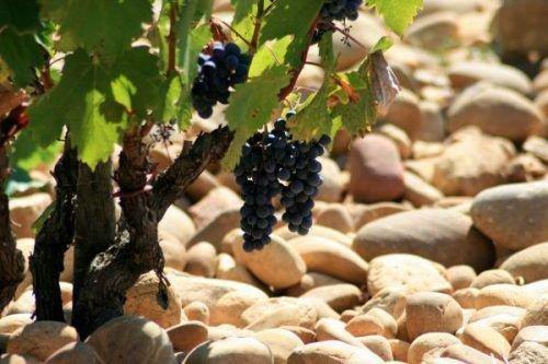 Смешивание почвы для винограда