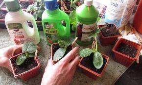 Выращивание огурцов: специфика подкормки