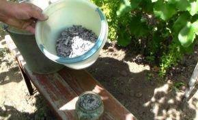 Как и когда вносить удобрения под виноград