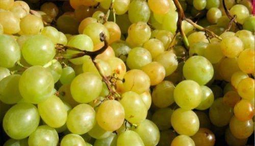 Виноград Мускат белый