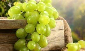 Лучшие сорта зеленого цвета винограда