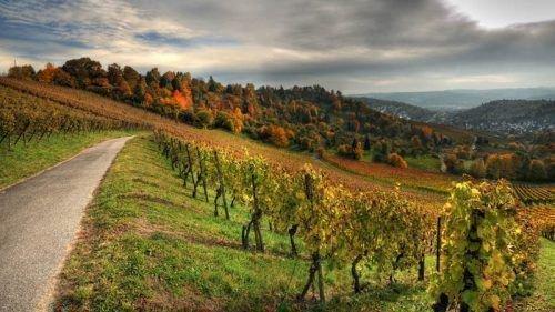 Виноградники Германии
