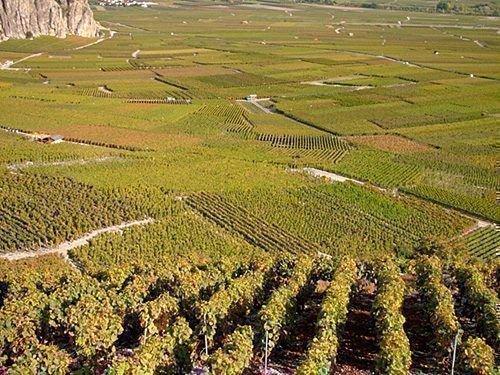 Виноградники Роны