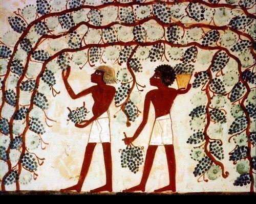 Виноградники в Древнем Египте