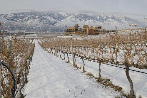 Зима виноградник