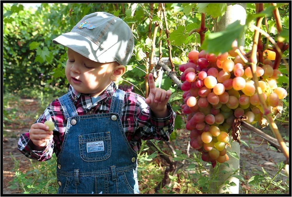 Ребенок и виноград