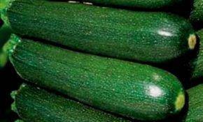 Основные характеристики выращивания кабачка цунеша