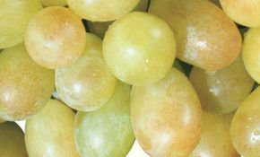 Краса Дона - сорт раннего винограда