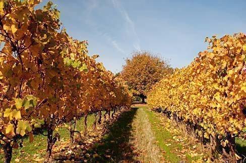 Осенние работы на винограде