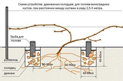 Полив винограда через дренажную трубу схема