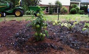 Что посадить после помидоров