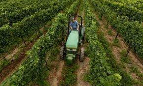 Обрабатываем виноград весной