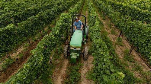 Работы на винограднике