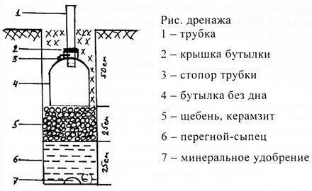 Схема дренажной трубы для винограда