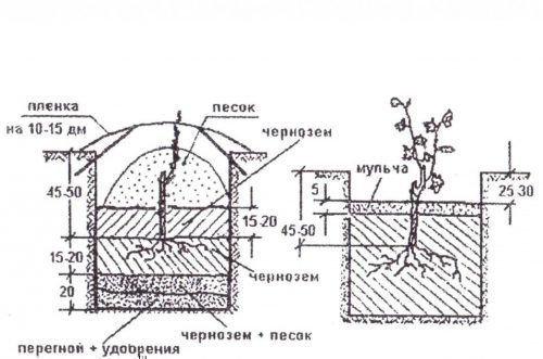 Схема ямы под виноград