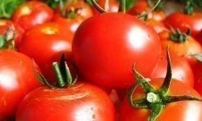Описание сорта томата: Волгоградский