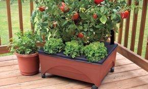 Помидоры (томаты) на балконе: уход и выращивание пошагово