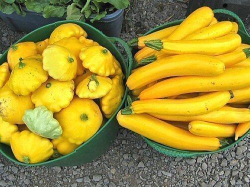 Желтые кабачки и патиссоны