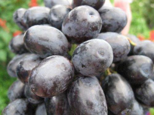 Виноградная ягода